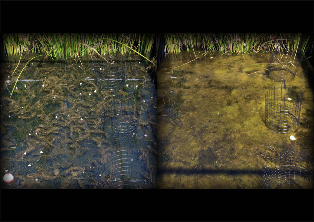 nutrients with nanoparticles