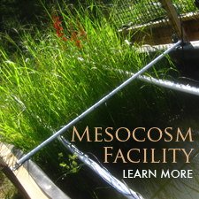 Link to mesocosm facility