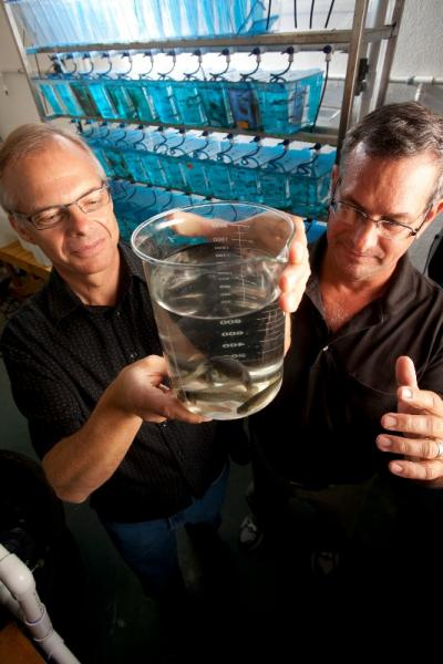 Mark Wiesner and Richard Di Giulio examine killifish in Di Giulio's lab