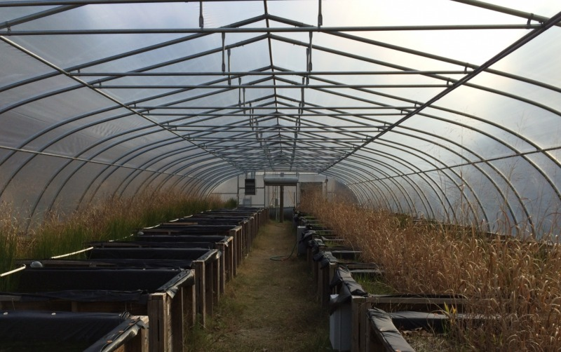 The mesocosm facility functions year-round