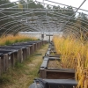 Our mesocosms run year round - here they display beautiful fall colors